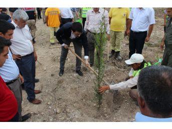 Sumbas'ta 15 Temmuz Hatıra Ormanı Oluşturuldu