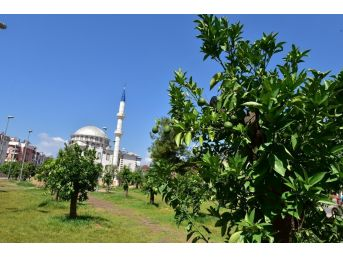 Kepez'e Anadolu Bahçesi