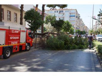 Aydın'da Facia Ucuz Atlatıldı