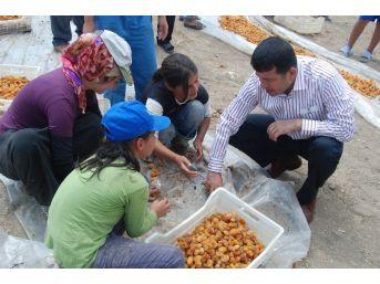 Ağbaba'dan Mevsimlik Tarım İşçileri İçin Araştırma Önergesi