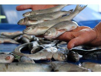 Van Balığı Tezgahlardaki Yerini Aldı