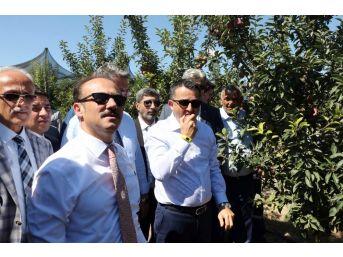 Bakan Pakdemirli, Yozgat'ta Meyve Bahçesini Gezdi