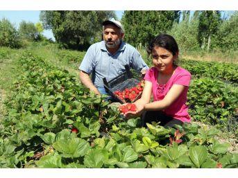 Köylüler Göçmesin Diye Alternatif Ürüne Yönelen Muhtar Örnek Oldu