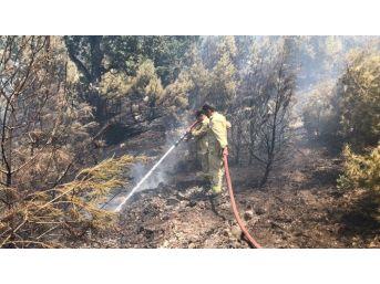 Kızılçam Ormanındaki Yangın Kontrol Altına Alındı