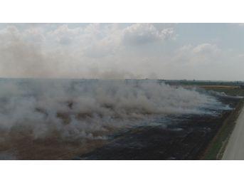 Çukurova'da Mısır Hasadıyla Birlikte Anız Yangınları Da Başladı