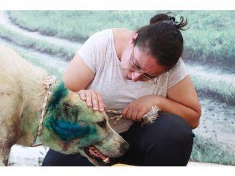 Antalya'da Çoban Köpeği Tabanca İle Vuruldu