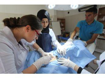 Stajyer Öğrenciler İlk Defa Ameliyat Heyecanı Yaşadı