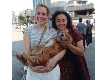 (özel Haber) 2 Bin Lira Ödüllü Köpek, Taksim Metrosunda Bulundu