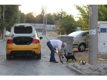 (özel) Hayvansever Taksiciden İnsanlık Dersi