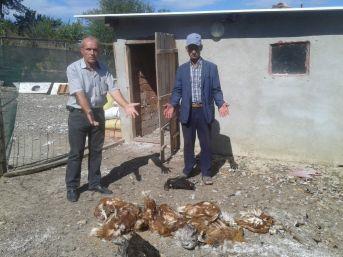 Tekirdağ'da Aç Kalan Köpekler, Tavuk Ve Hindileri Telef Etti