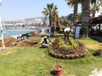 Kuşadası'na 29 Palmiye Ağacı Dikildi