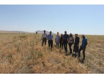 Bitlis'te Nohut Hasadı