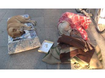 (özel)yıllardır Bir Cadde Üzerinde Köpekle Birlikte Uyuyan Adam Yürekleri Sızlattı