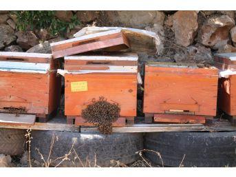 (özel) Devlet Desteğiyle Doğal Bal Üretiyor