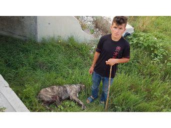 Rahatsız Ediyor Diye Köpeği Tüfekle Vurdu