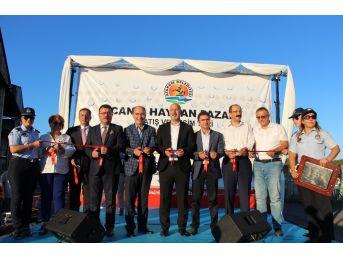 Atakum Belediyesi Canlı Hayvan Pazarı Satış Ve Kesim Yeri Açıldı