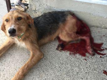 Bahçesine Giren Köpeği Baltayla Ağır Yaraladı