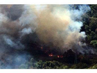 Kdz. Ereğli'de Orman Yangını 3 Saatte Söndürüldü