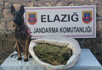 Jandarma, 10.020gr Esrar Maddesi Ele Geçirdi